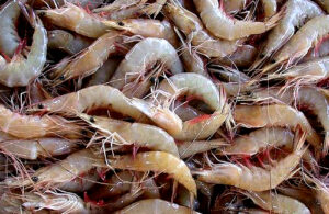 Read more about the article सागरी कोळंबी (Indian Prawn)