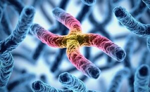 गुणसूत्र (Chromosome)
