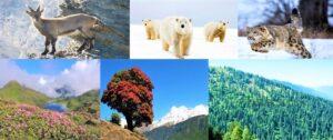 हिमालयातील वनस्पती व प्राणिजीवन (Plants and Animal Life in Himalaya)