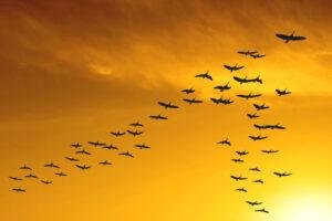 पक्ष्यांचे स्थलांतर (Bird migration)