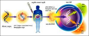जनुकीय उपचार पद्धतीतील अब्जांश तंत्रज्ञान (Nanotechnology in Genetic Treatment Methods)