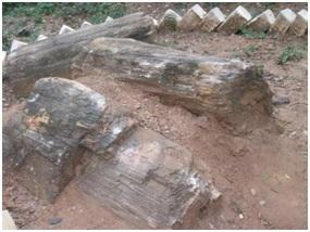 जीवाश्म उद्याने : राष्ट्रीय जीवाश्म लाकूड उद्यान, तिरूवक्कराई (Fossil Parks : National Fossil Wood Park, Tiruvakkarai)