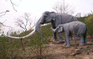 जीवाश्म उद्याने : सिवालिक जीवाश्म उद्यान (Fossil Parks : Siwalik Fossil Park)