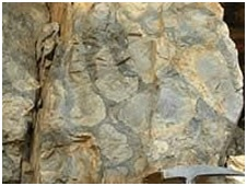 जीवाश्म उद्याने : शैवालस्तराश्म उद्यान, भोजुंडा (Fossil Parks : Stromatolite Park, Bhojunda)