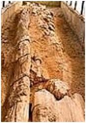 जीवाश्म उद्याने : अकाल जीवाश्म लाकूड उद्यान (Fossil Parks : Akal Fossil Wood Park)