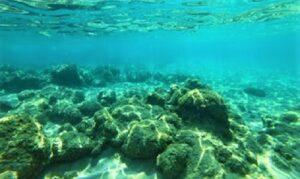 हिंदी महासागराची तळरचना (Submarine Features in Inadian Ocean)