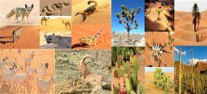 Read more about the article सहारा वाळवंटातील वनस्पती व प्राणिजीवन (Vegetation and Animal Life in Sahara Desert)