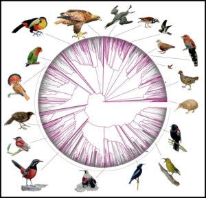 जीनोम आधारित पक्ष्यांचे वर्गीकरण (Genomic basis of Bird classification)