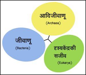 तीन अधिक्षेत्र वर्गीकरण (Three domain classification)