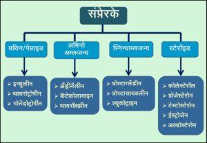 संप्रेरक वर्गीकरण (Hormones Classification)